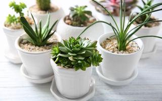 De ce e bine pentru sănătatea ta să ai plante suculente în casă