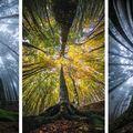 Privește cerul! 14 imagini care surprind frumusețea pădurii
