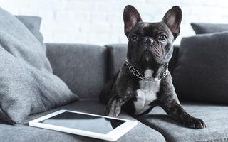 Cum să-ți ajuți câinele să iasă bine în poze