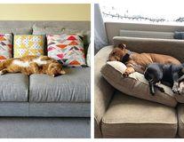 Somnoroase animale: 10 imagini în care cei mai buni prieteni ai omului i-au furat locul pe canapea