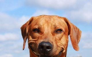 Îi vei adora! 20 de câini a căror carismă este impresionantă