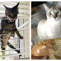 """""""Infractorii"""" cu blăniță: 10 pisici obraznice care le dau bătăi de cap stăpânilor"""