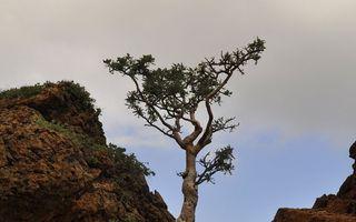 Natura face întotdeauna ce vrea ea! 20 de fotografii impresionante