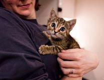 Hug Your Cat Day, ziua în care pisicile primesc îmbrățișări: Cele mai frumoase imagini care marchează această prietenie