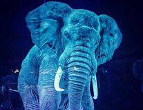 Un circ din Germania folosește holograme în locul animalelor, iar oamenii sunt încântați