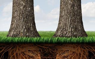 Copacii vorbesc între ei într-un limbaj pe care îl putem învăța
