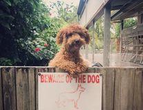 Atenţie, câine rău! 30 de câini periculos de amuzanţi