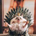 Ai o zi proastă? 20 de imagini cu animale simpatice care sigur te fac să zâmbești