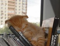 Un pui de somn nu strică niciodată: 18 pisici care dorm pe unde apucă
