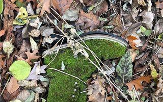Cele mai ciudate lucruri găsite în pădure: 30 de situaţii inedite