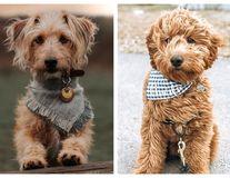 25 de câini din rase încrucișate: Sunt irezistibili!