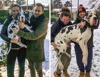Au vrut un câine, dar s-au ales cu un urs. 20 de imagini amuzante