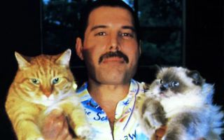 Freddie Mercury şi pisicile sale: 17 imagini care demonstrează cât de mult le-a iubit