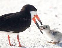Pasărea care-și hrănește puiul cu un chiștoc de țigară, imaginea revoltătoare care ne dă tuturor o lecție