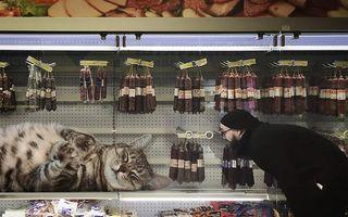 Viața într-o lume a pisicilor uriașe: Aceste imagini îți dau de gândit