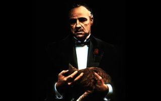 """15 lucruri pe care nu le știai despre cele mai bune filme: Cum a ajuns Marlon Brando să țină o pisică în brațe în """"Nașul"""""""