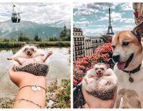 Cel mai fericit arici din lume: 10 imagini cu care a cucerit milioane de fani pe Instagram