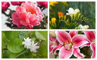 Flori de gradină cu miros puternic. Plante minunate care vor aduce parfum în curtea ta