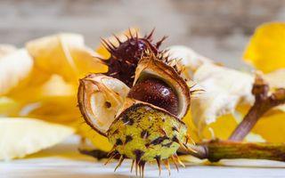 Suplimentează-ți meniul cu extract de castan: 5 beneficii pentru organism