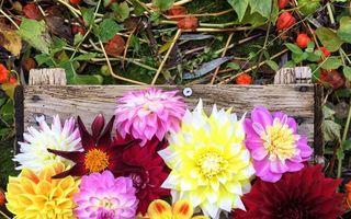 Cele mai frumoase flori de toamnă. Plante perene pe care să le ai în grădină