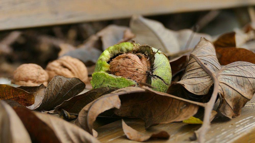 Băi și spălături locale recomandate în tratarea ulcerului varicos | Paradis Verde