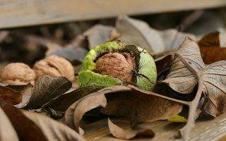 10 tratamente naturiste cu frunze de nuc