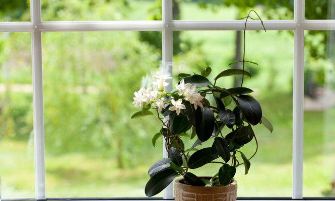 Plante la ghiveci pentru dormitor, care te ajută să dormi