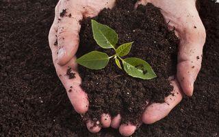 Noi vrem pământ, dar nu de orice fel! 6 secrete ale solului de care depindem toți