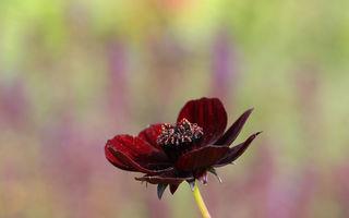 Parfum de neînlocuit: cele mai rare flori din lume