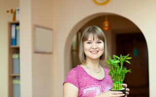 Poți avea aer curat și în interior: 6 micro plante de apartament
