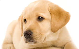 Anii câineşti - mit sau realitate?