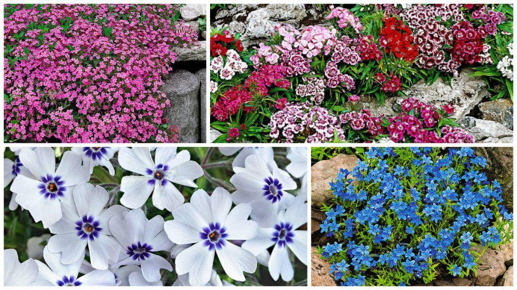 pante covor cu flori