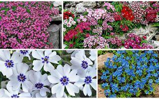 Plante covor cu multe flori pentru o grădină plină de culoare