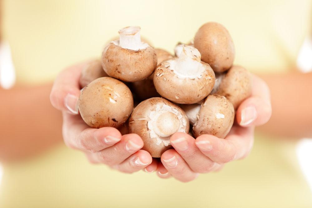ciuperci nutritie