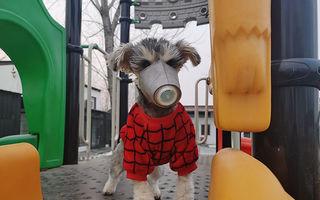Coronavirusul îi îngrozește pe chinezi: Acum și câinii poartă mască