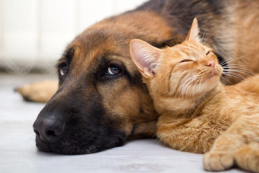 Un animal de companie nu este o jucărie, ci un membru al familiei. Ce ar trebui să știi înainte de a adopta unul