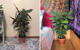 17 flori care și-au revenit uimitor după ce au fost salvate: Natura nu se dă bătută!