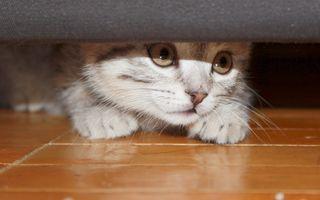 Cum să ai grijă de o pisică timidă