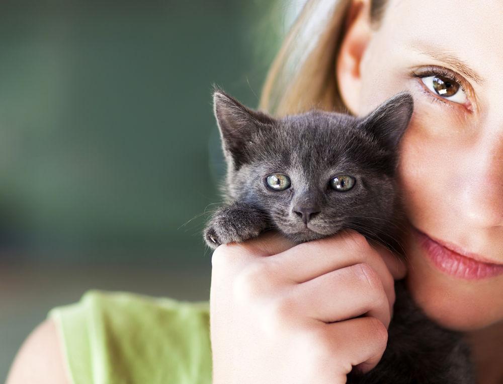 Sfaturi cumparare pisica