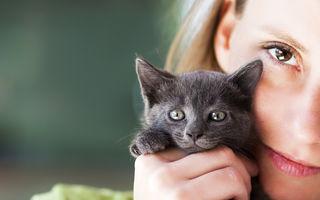 Sfaturi de cumpărare când alegi o pisică