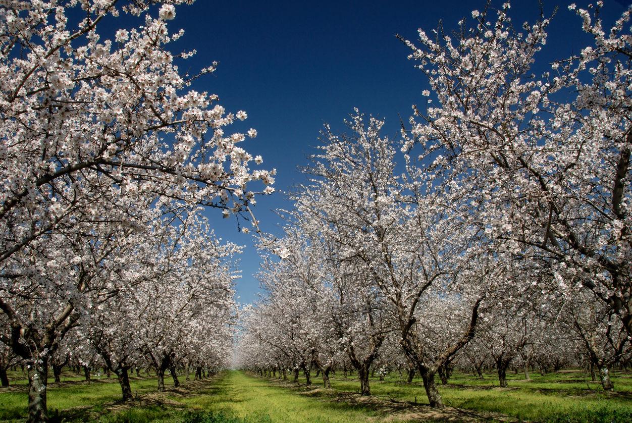 Echinocţiu de primăvară – cum sunt afectate zodiile