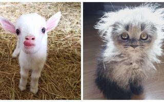 Terapie cu animale. 17 imagini care îți vor îmbunătăți starea de spirit