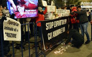 Auditul Comisei Europene din portul Midia: România, sursă de dezastre maritime la exportul cu animale vii