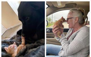 #Veștibune: 60 de animale adoptate în aprilie. Carantina nu ne oprește să fim buni!