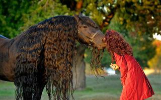 Cel mai frumos cal din lume: Frederik Cel Mare, un fotomodel pur sânge