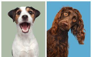 20 de câini frumoși care arată fantastic și în poze: Stăpânii lor au de ce să fie mândri