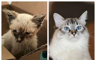 #VeștiBune. Câte vieți are o pisică: Povestea unei supraviețuiri miraculoase