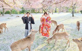 Scena de vis pe care un fotograf a surprins-o într-un parc din Japonia - VIDEO