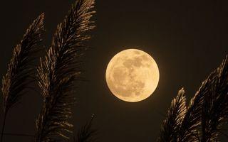 Venus retrograd in Gemeni 2020: aceste 3 zodii vor fi afectate