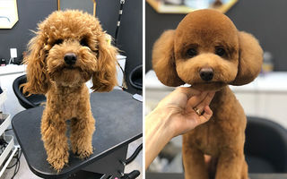 Și câinii au dus dorul frizerului. 30 de imagini înainte și după carantină